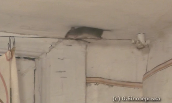 Миша-акробатка (ВІДЕО)