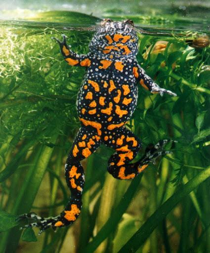 Дві крихітні перелякані жабки застрибали по підлозі спортзалу…